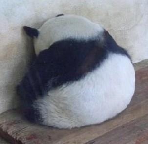 sad-panda.jpg