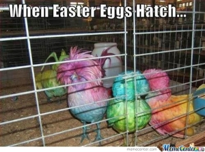 when-easter-eggs-hatch_o_260108